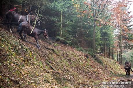 Prace v lese na zivnost